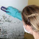 Frau entfernt Schimmel mit Bürste. Schimmelbildung im Wohnraum vermeiden