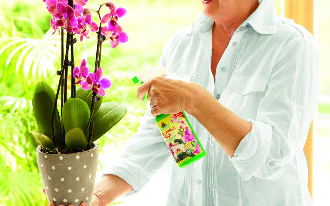 Einfache Orchideenpflege