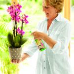 Orchideenpflege im Eigenheim