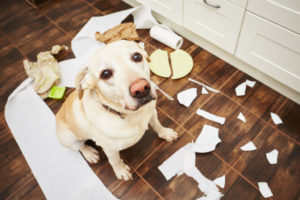Ein Hund guckt in die Kamera, um ihn herum liegen zerstörte Alltagsgegenstände.