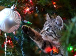 Gesteigerte Brandgefahr: Eine neugierige Katze sitzt im Tannenbaum und spielt mit dem Baumschmuck.